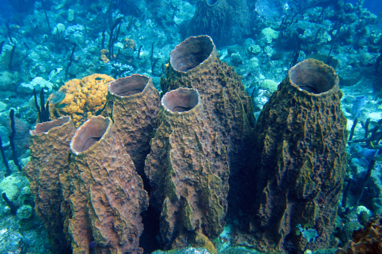 Sponges on a coral reef