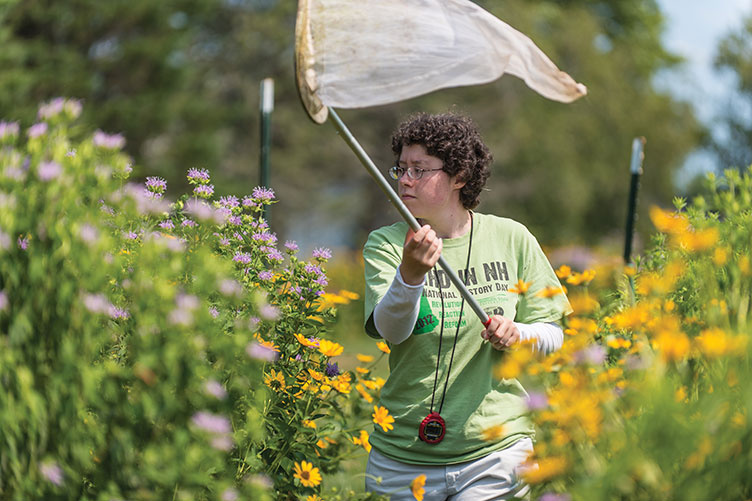 Molly Jacobson '17 collects bees as part of her 2016 Summer Undergraduate Research Fellowship (SURF) project examining the biodiversity and conservation of native pollinators in southern New Hampshire