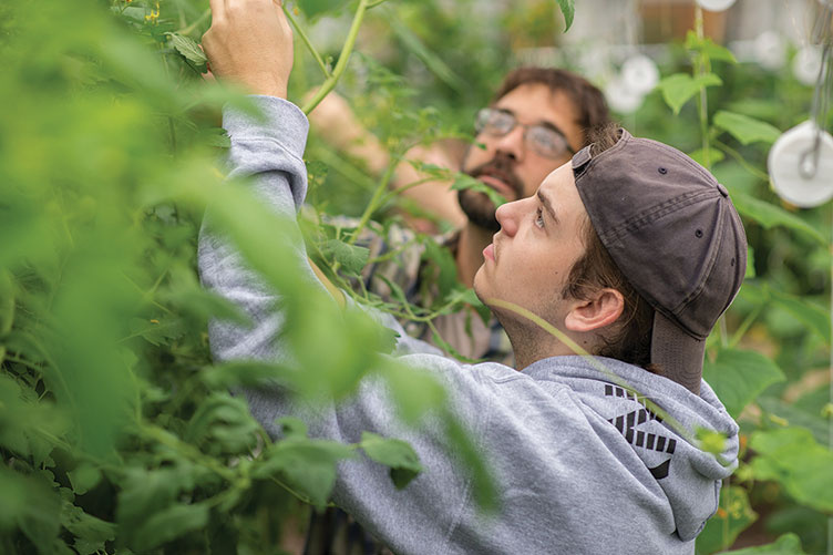 UNH students working with plants in the greenhouses