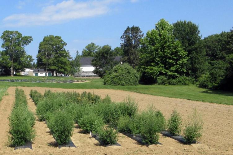 Quinoa field trials at UNH