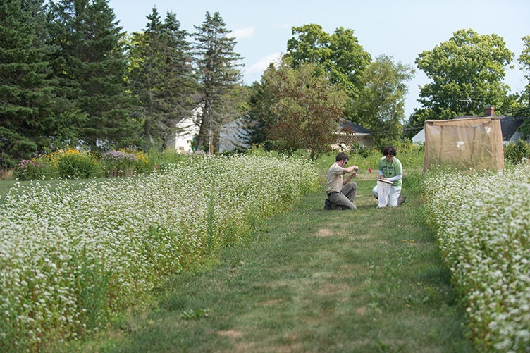 UNH student researchers catching bees in a field