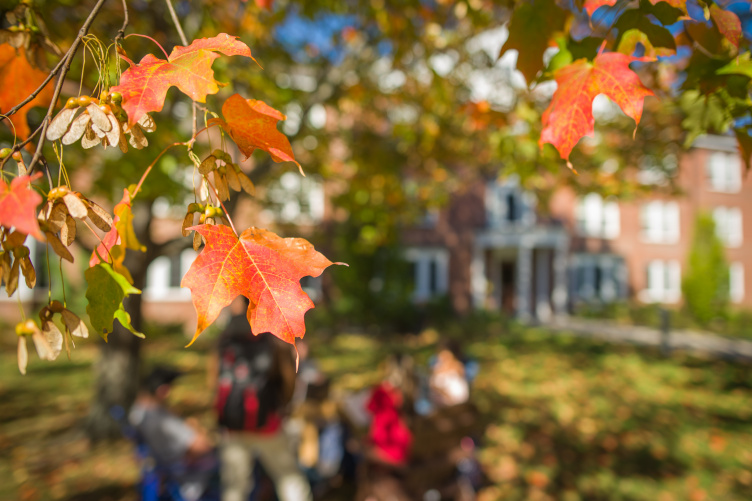 image of fall leaves at UNH
