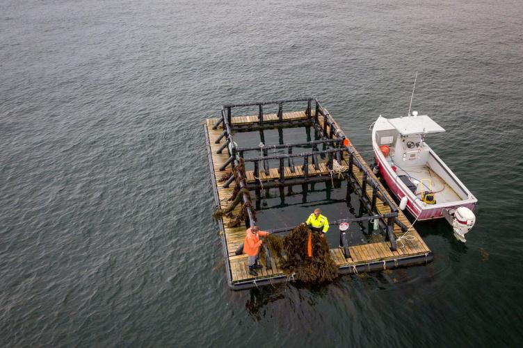 Overhead view of aquaculture pen in ocean