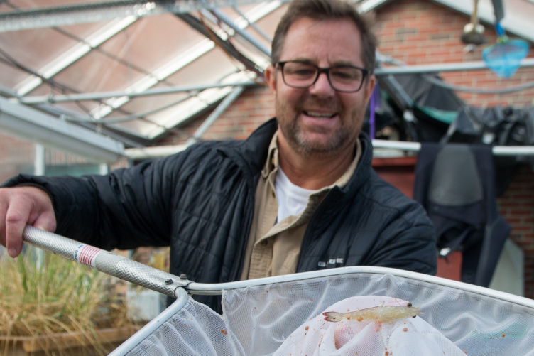 UNH researcher Michael Chambers with a greenhouse-grown shrimp in a net