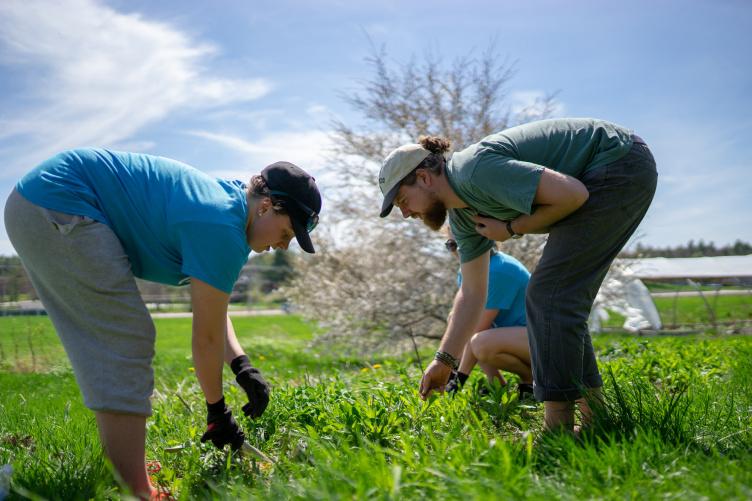 UNH students weeding a garden