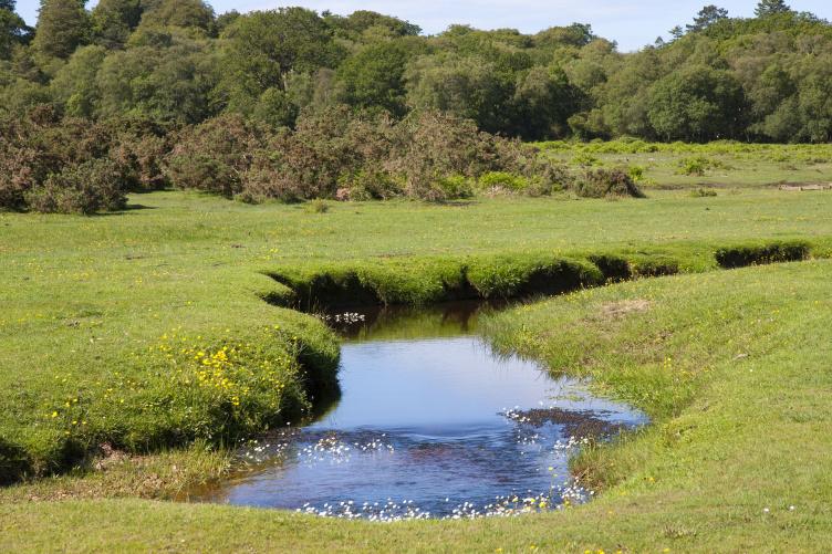 Countryside stream