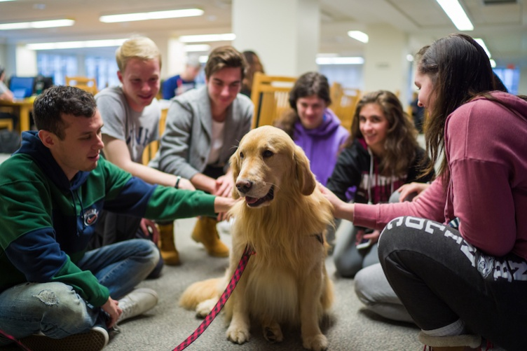 students surround golden retriever at Dimond Library