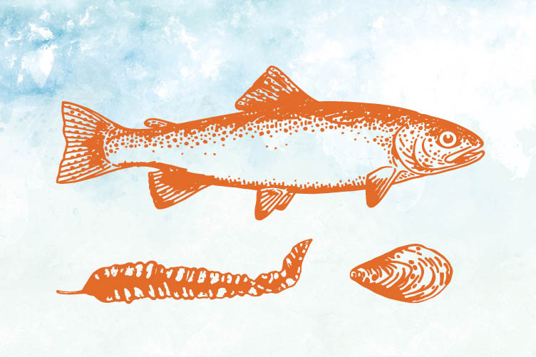 Illustration of a fish, seaweed, mussel