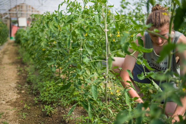 Student working in green house