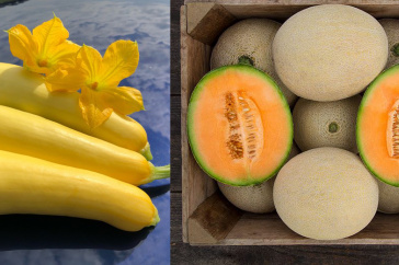 squashesand cantaloupe
