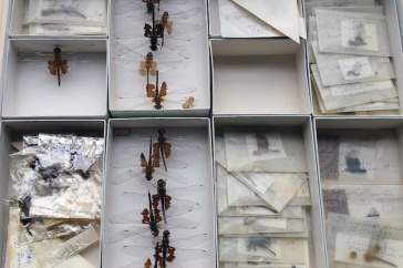 specimens in the UNH collection arranged by soecies