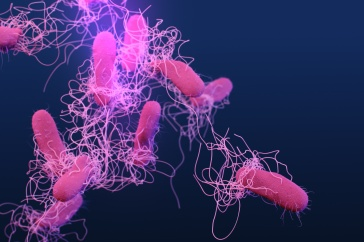 Antibiotic-resistant bacteria