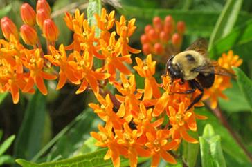 Bee in wildflower meadow