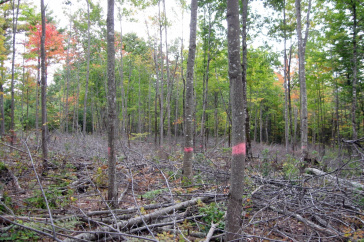 trees in the forest thinning due to carbon storage