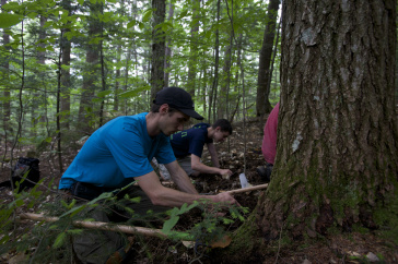 Doctoral student Ryan Stephens (front) and undergraduate student Tyler Remick dig for truffles in the Bartlett Experimental Forest.