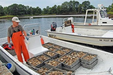 Ray Grizzle/Oyster farming