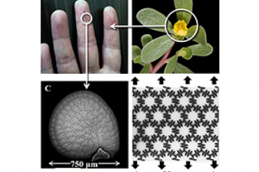 Seed coat images