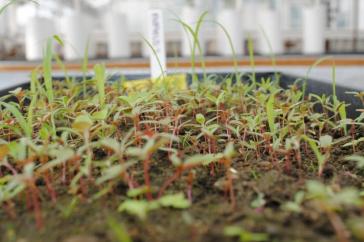 photo of seedbank at UNH