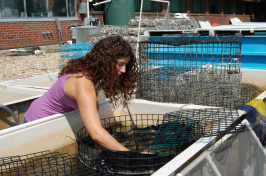 erika moretti with hand in marine tank