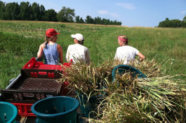 students at farm internship
