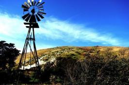 winning image of windmill