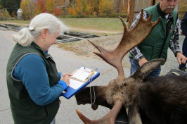 Kristine Rines checks in a moose taken in this year's hunt, which ended Sunday. (COURTESY)
