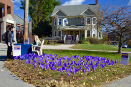 Small, purple flags cover the lawn outside of the Wolff House at UNH. There are 322 flags, each representing 10 students who have been affected by relationship abuse.