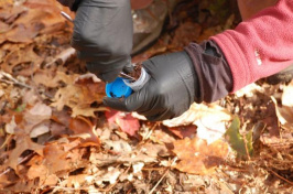 gathering a soil sample