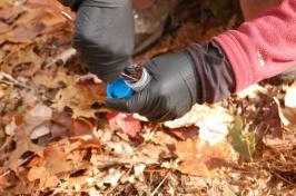 gathering a soil sample