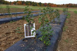 glossy buckthorn research site at UNH
