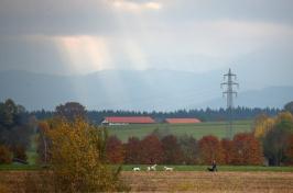A man walks his dog through farmland in a field near Holzkirchen, in the south of Germany. A man walks his dog through farmland in a field near Holzkirchen, in the south of Germany.