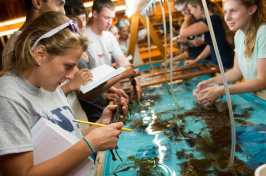 Students look at items in a tank at UNH's Shoals Marine Lab.