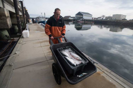 UNH steelhead trout