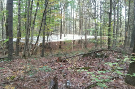 Wooded area at Thompson Farm