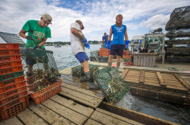 fishermen hauling up oysters