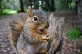 a squirrel eating a nut (KAI SCHREIBER / FLICKR)