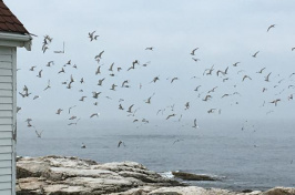 a flock of seabirds flying