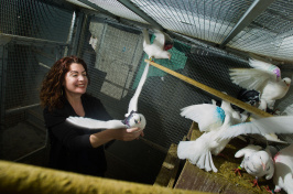 Rebecca Calisi working with pigeons in a cage (Photo: Karin Higgins/UC Davis)
