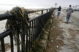 Seaweed and other debris washed up along Ocean Boulevard in Hampton. (JASON SCHREIBER)