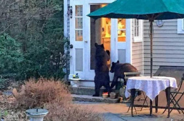 Bears in someone's backyard. This photo is taken from an online petition on change.org that hoped to save bears in the Hanover area. (JED WILLIAMSON)