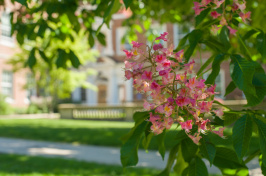 UNH campus in spring