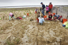 Molin Upper Elementary School fourth-graders help plant dune grass on Plum Island