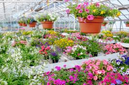 Macfarlane Research Greenhouses at UNH