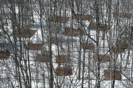 Overhead view of forest in snow, with square patches of bare ground