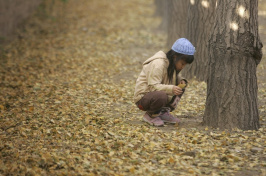 A girl plays in the aftermath of a giant ginkgo dump in Beijing in 2006.