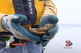 close-up of man holding an oyster