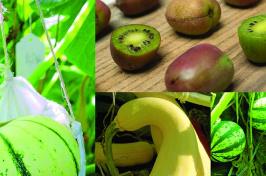 UNH plant breeding