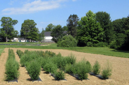 Quinoa field trials at UNH