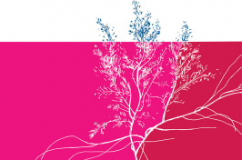 pink and red illustration of an invasive seaweed