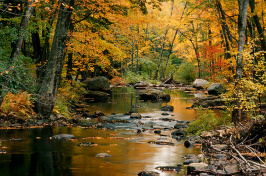 a river in autumn in NH